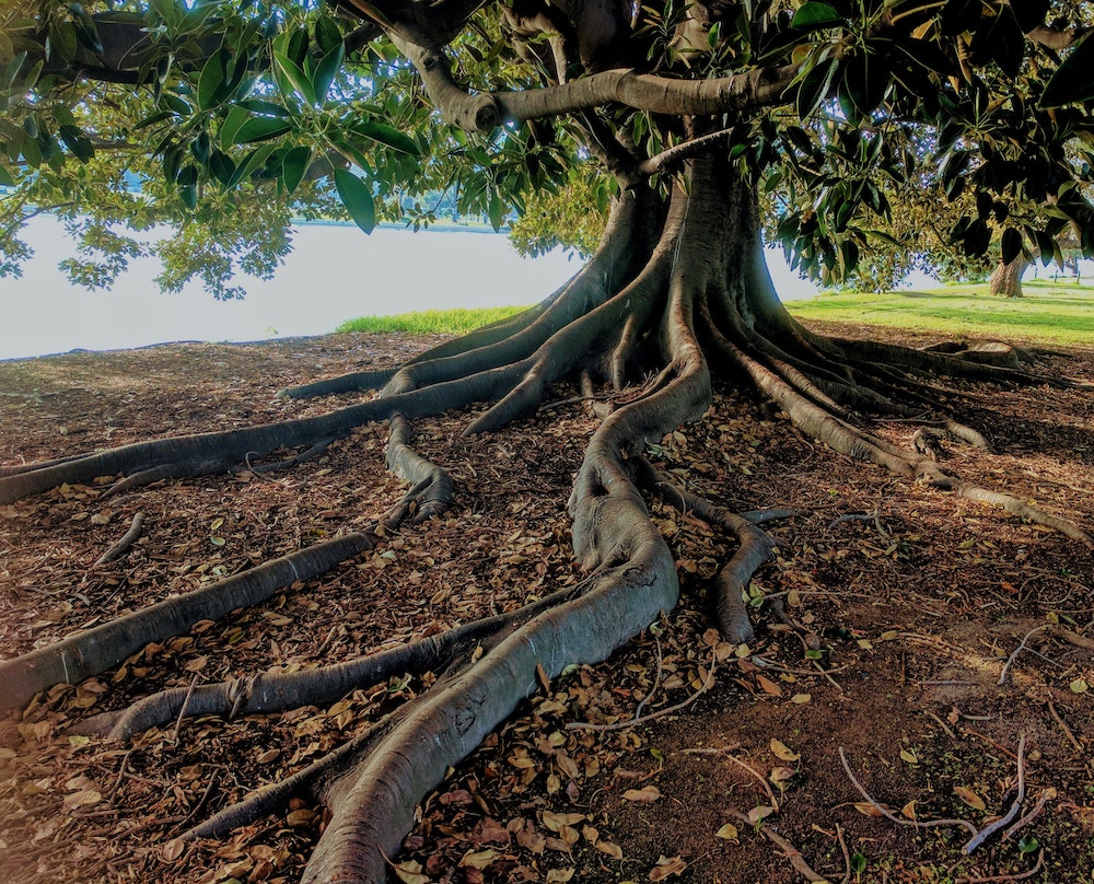 To Root and Rise: An invitation to a new academic year